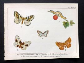 Joanny Martin 1902 Antique Butterfly Print 47